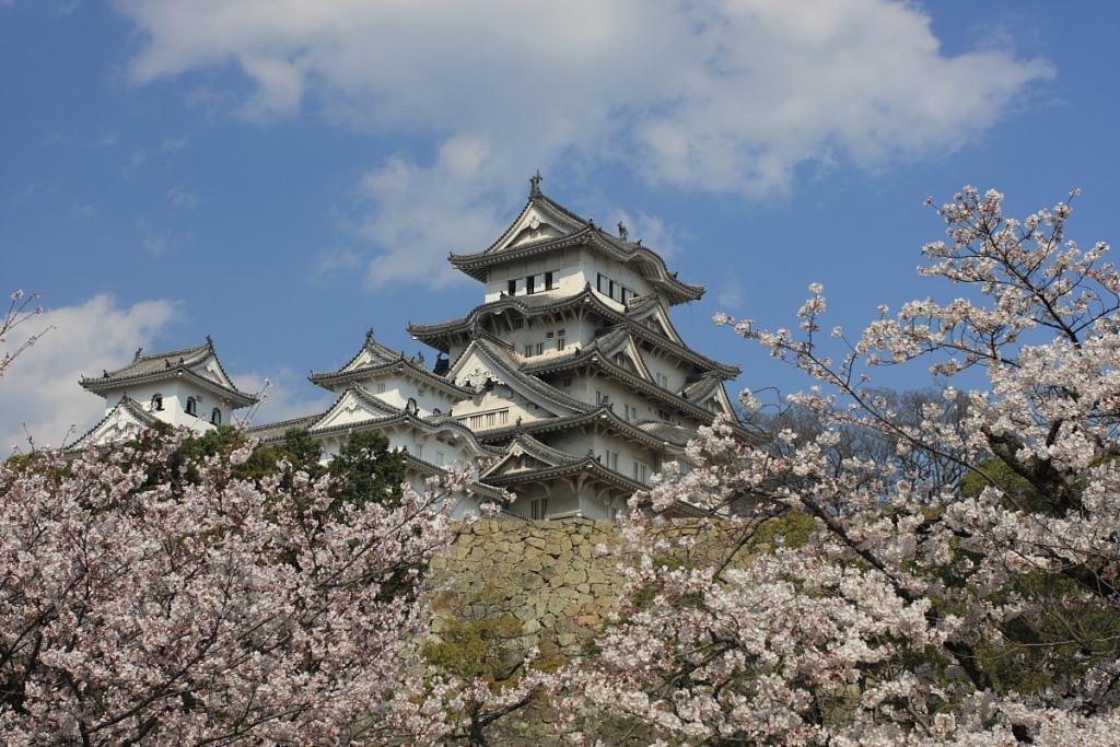 Cherry blossoms_Japan