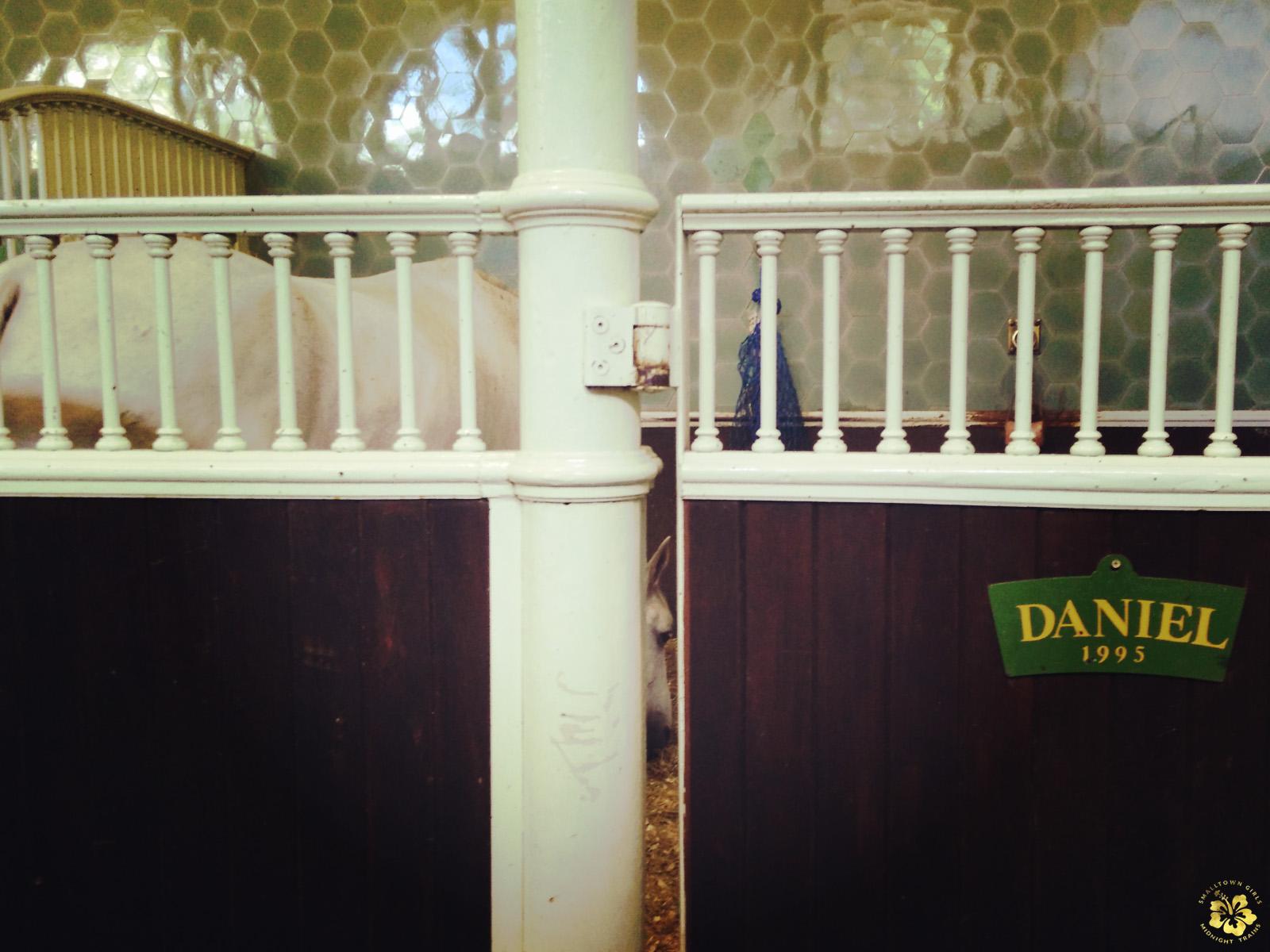 London Pass_Royal Mews_Daniel
