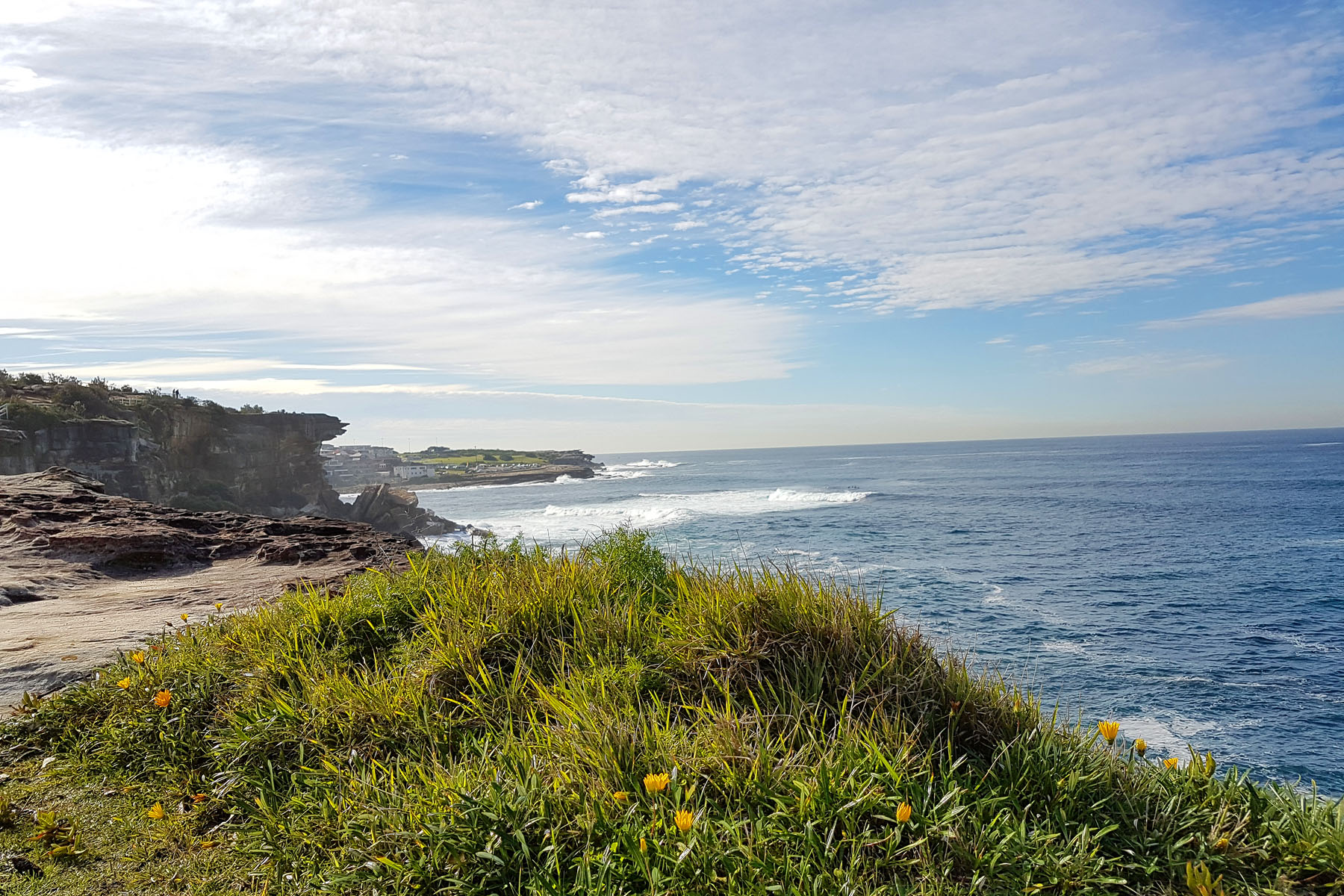 SGMT Australia Sydney_Bondi to Coogee Coastal Walk_07 Cliffs and flowers