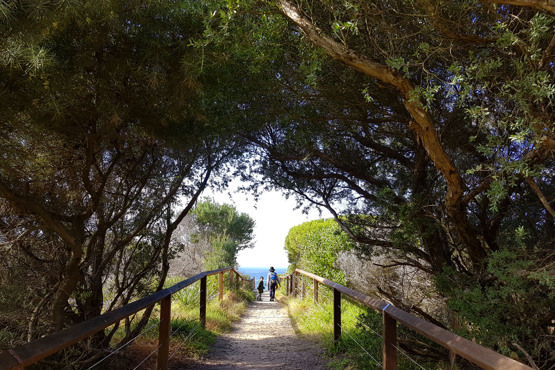 SGMT Australia Sydney_Bondi to Coogee Coastal Walk_08 Leafy tunnel