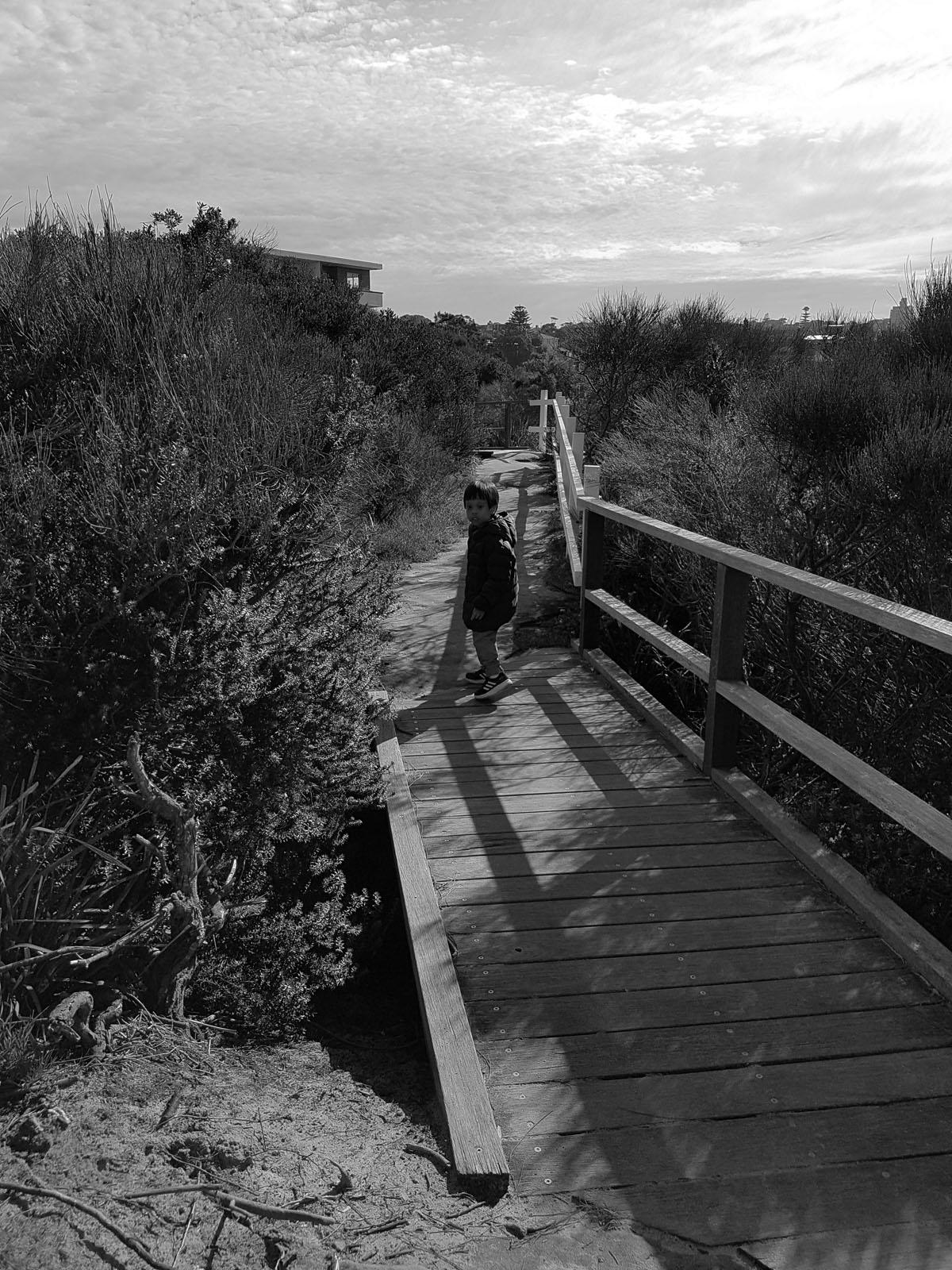 SGMT Australia Sydney_Bondi to Coogee Coastal Walk_10 Coastal vegetation
